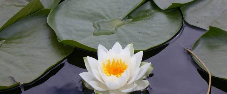 Dikkat ! Bu Çiçekleri Koparana Rekor Ceza - Nilüfer