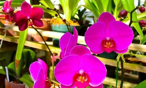 Avukatlar İçin Orkide Bakımı Önerileri - 1